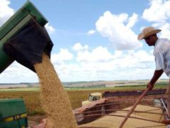 Exchange mulls launch of Brazil soyabean contracts
